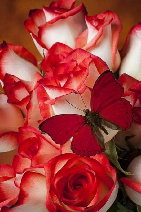 Merveilles de la nature - les papillons - - Page 4 X_8212