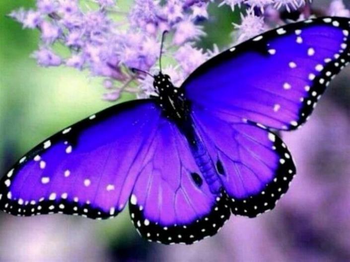 Merveilles de la nature - les papillons - - Page 4 X_8412