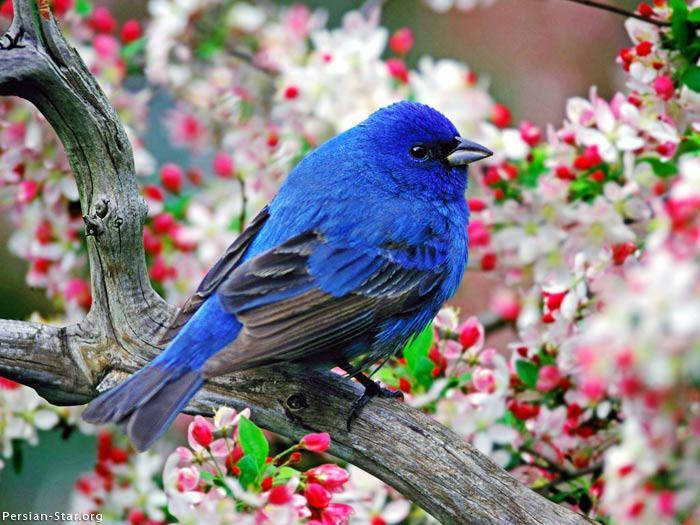 Les oiseaux du monde * - Page 4 X_8511