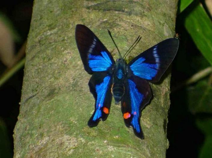 Merveilles de la nature - les papillons - - Page 4 X_8512