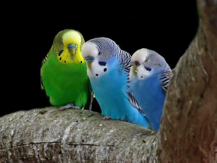 Les oiseaux du monde * - Page 4 X_8611