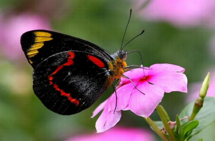 Merveilles de la nature - les papillons - - Page 4 X_8712