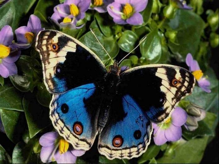 Merveilles de la nature - les papillons - - Page 4 X_8813