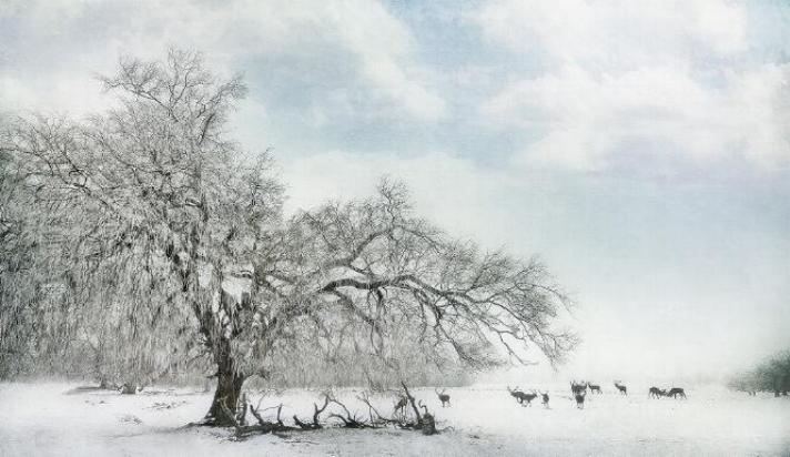 Beauté hivernale * - Page 5 X_8814