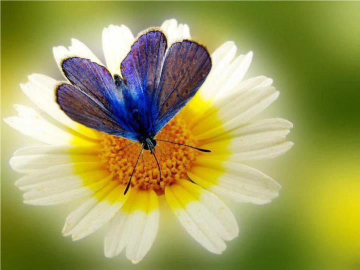 Merveilles de la nature - les papillons - - Page 4 X_9013