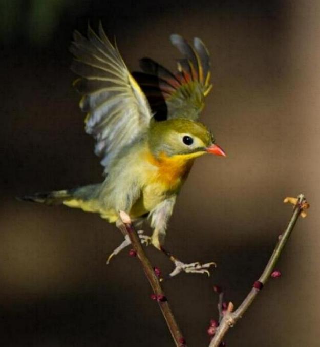 Les oiseaux du monde * - Page 4 X_9111