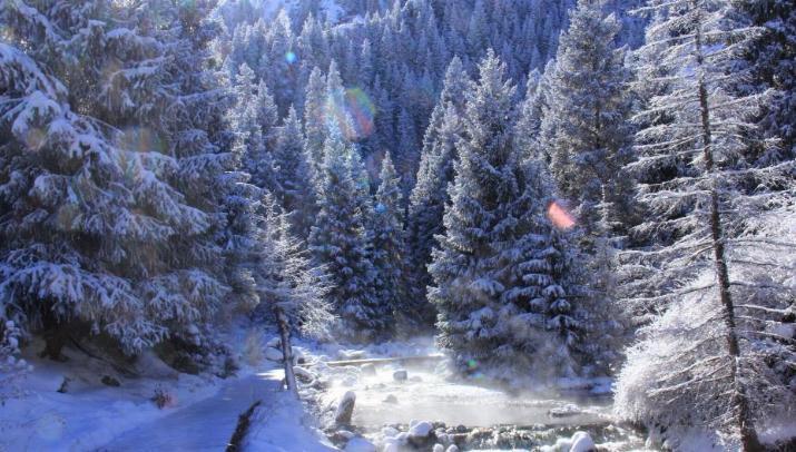 Beauté hivernale * - Page 5 X_9314