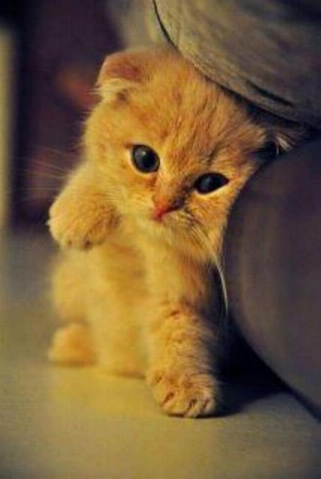 Les chats - nos petits compagnons - Page 5 X_9410