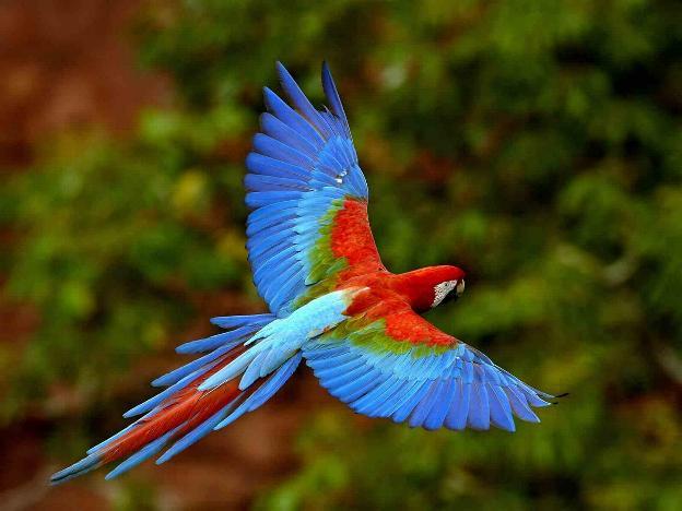 Les oiseaux du monde * - Page 4 X_9412