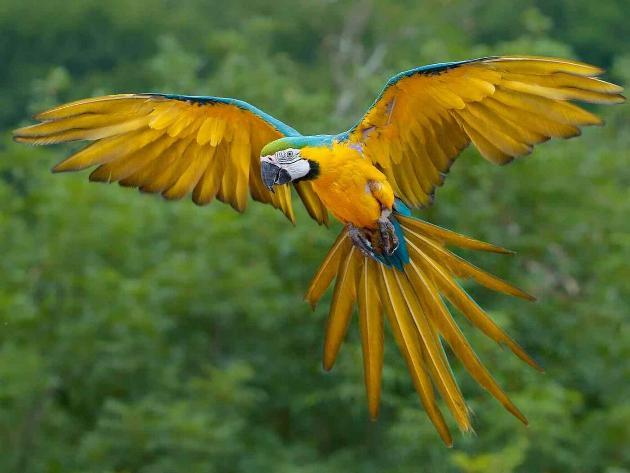 Les oiseaux du monde * - Page 4 X_9511