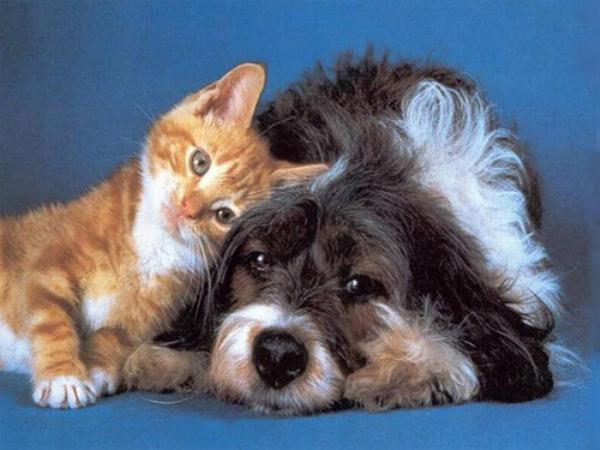 Les chats - nos petits compagnons - Page 5 X_9610