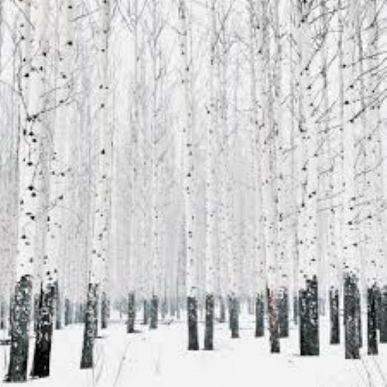 Beauté hivernale * - Page 5 X_9615