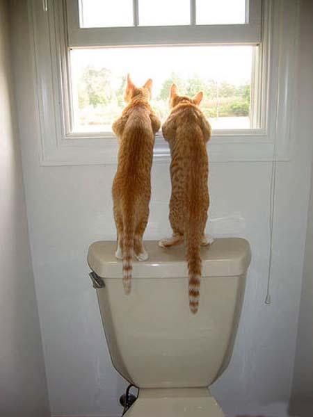 Les chats - nos petits compagnons - Page 5 X_9810
