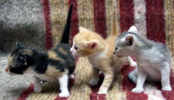 Les chats - nos petits compagnons - Page 5 X_9910