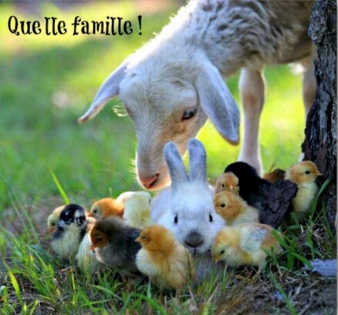 Famille recomposée * Xx_11_18