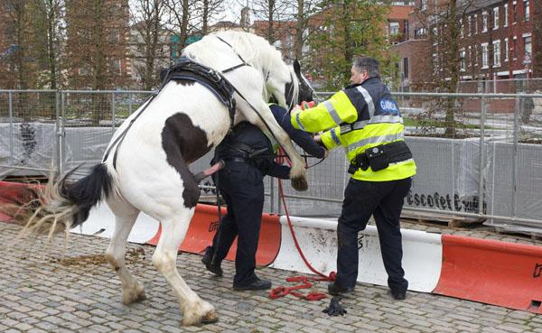 Rodica Kollo -du-te niţel mai încolo , de la deal mai în aval , sub burta unui cal ca să cânţi din caval Armasa10