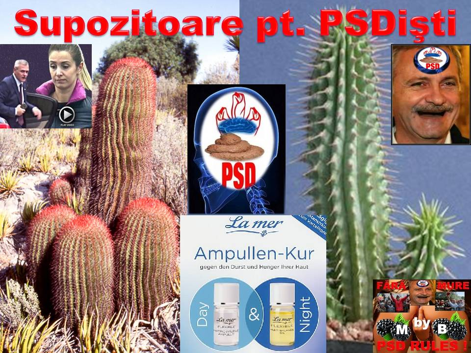 vin postacii pesedişti, dau năvală precum muştele la căcat : Mihai Onofrei , Neluțu Alexa,Lucian Romanescu Cactus11