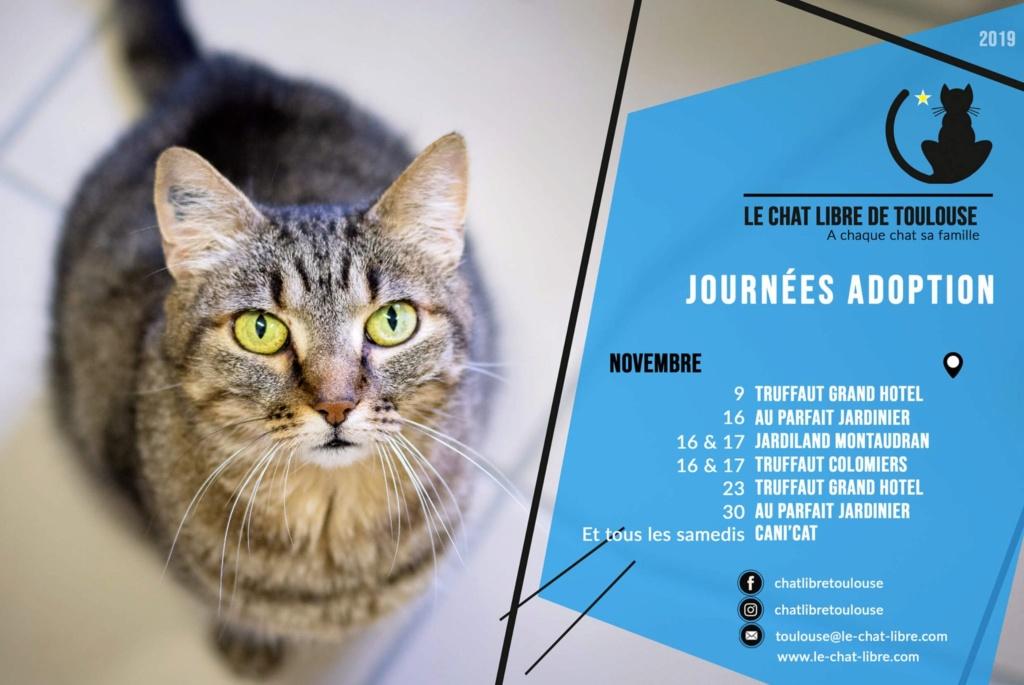 Ecole du Chat Libre de Toulouse - Portail Affich11