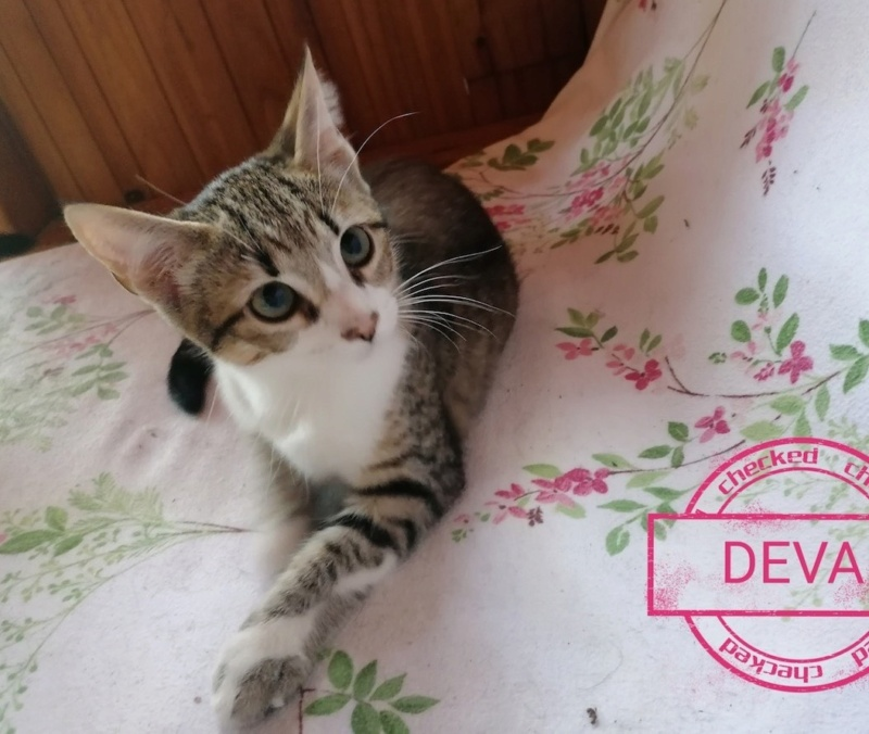 [Adoptions] SAMEDI 12 SEPTEMBRE 2020 : TRUFFAUT GRAND HOTEL Deva10