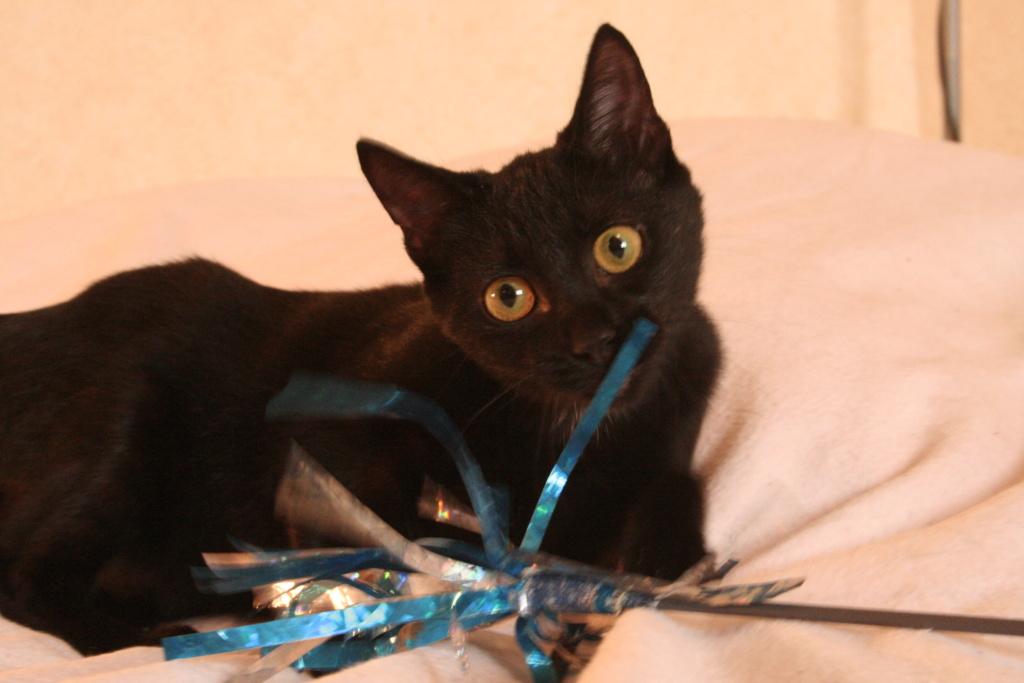 MISS MOUCHETTE 27/02/21 en accueil en vue d'adoption Miss_m11