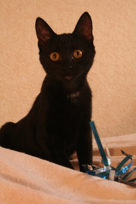 MISS MOUCHETTE 27/02/21 en accueil en vue d'adoption Miss_m12