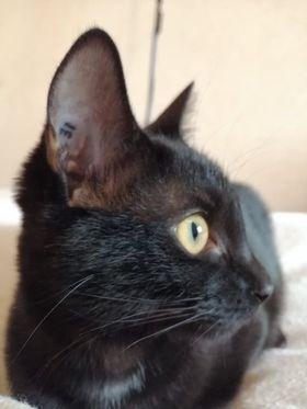 MISS MOUCHETTE 27/02/21 en accueil en vue d'adoption Mouche13