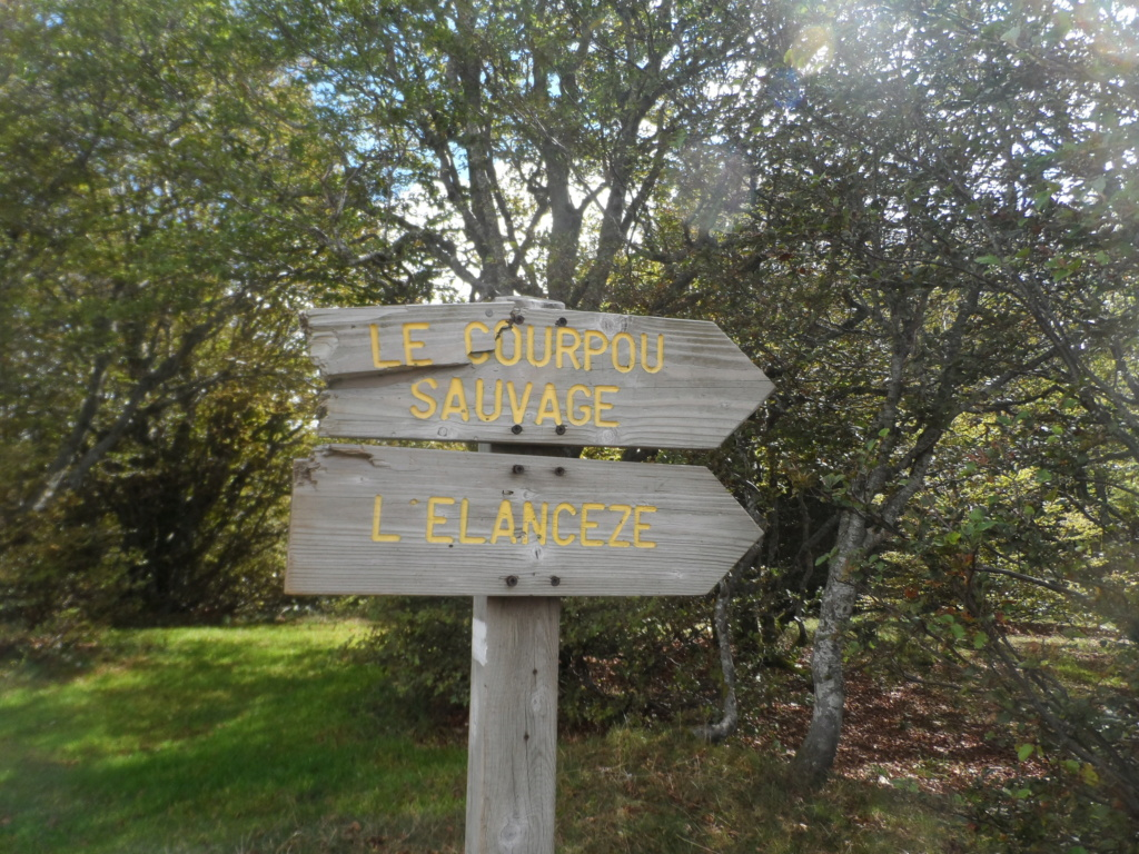 Votre sommet préféré des monts du Cantal  Sd18_115