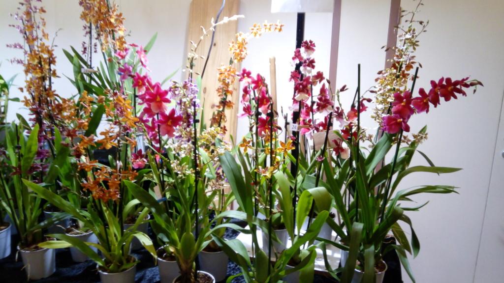 Bédée salon de plantes exotiques (35) Img_2068