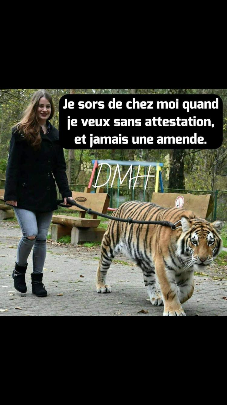 Humour du jour - Page 17 12592610