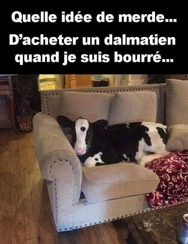 Humour du jour - Page 35 39846710