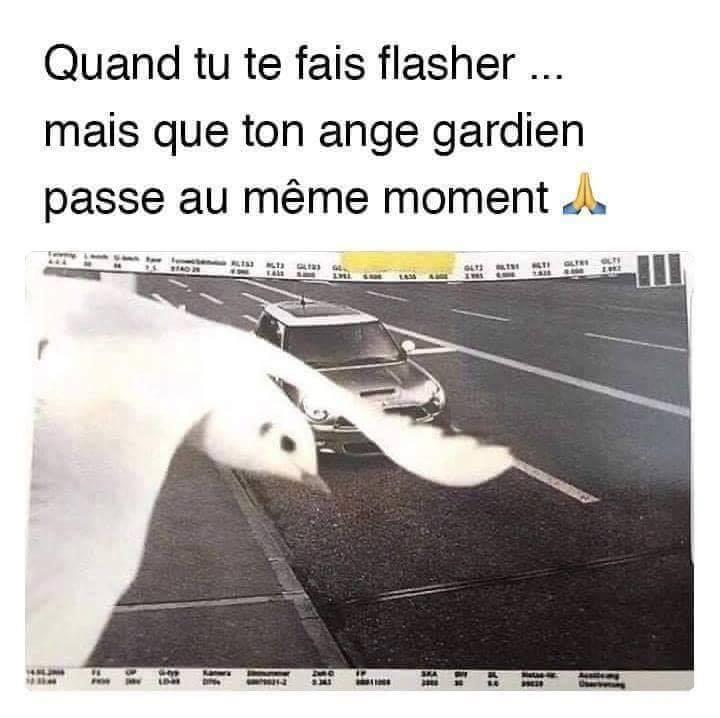 Humour du jour - Page 40 43603010