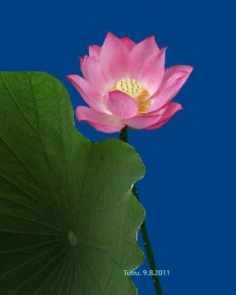 Hạnh Người Con Phật  Fb_im175