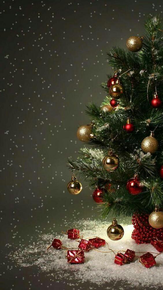 Chúc Mừng Noel 24.12.2020.2021 Ffec8410