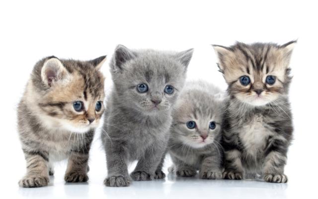 SFATURI UTILE  Cats_410