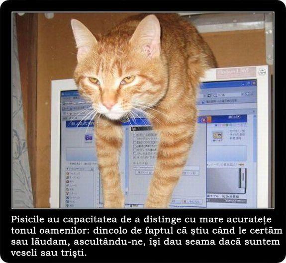 Pisici  dragi,LA MULTI ANI ! Creo-e10