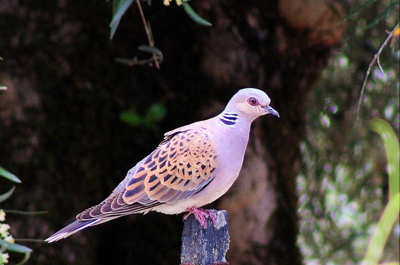 Fórum Aves - Birdwatching em Portugal - Portal Rola_b10