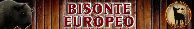 TOP 5 BISONTE EUROPEO Bisont11