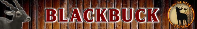 TOP 5 BLACKBUCK Blackb11