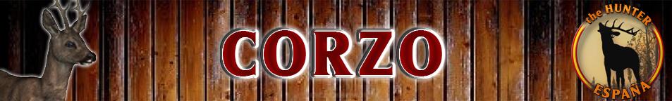 TOP 5 CORZO Corzo_10