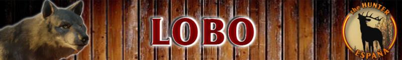 TOP 5 LOBO Lobo_b10