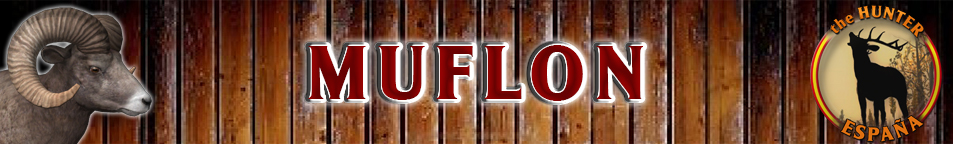 TOP 5 MUFLON Muflon10