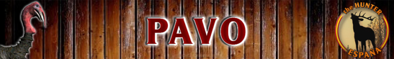 TOP 5 PAVO Pavo_b10