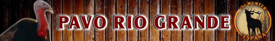 TOP 5 PAVO RIO GRANDE Pavo_r10