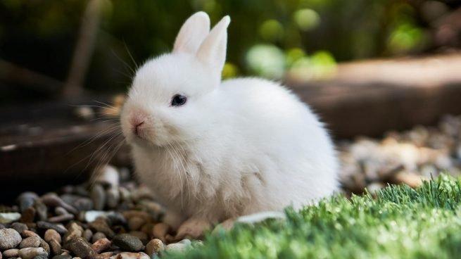 Curiosidades de los conejos que te sorprenderán Pablo-10