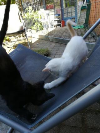 Odo, mâle blanc van et roux, type européen, né le 22.06.2018 Img_2012