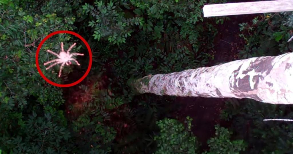 Des scientifiques ont découvert des araignées «volantes» 1a516110