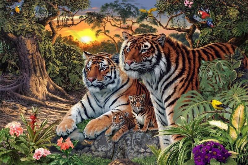 Combien il y a t-il de tigres? 77decb10