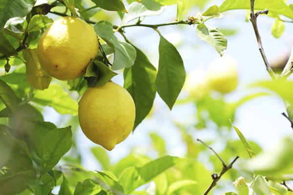 3 astuces santé à connaître Citron10
