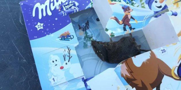 Elle découvre une souris morte dans le calendrier de l'Avent de sa fille Https313