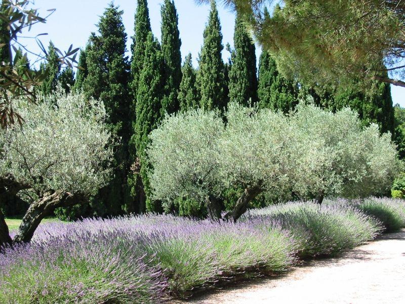 Concours du plus beau Jardin  - Page 3 Jalna11